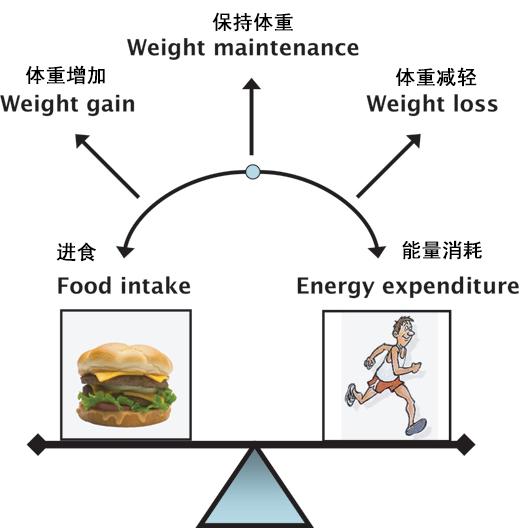 肥胖人士日常生活减肥建议
