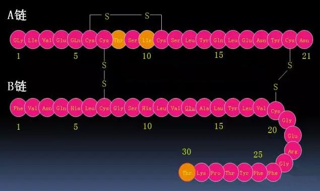 秒懂胰岛素分类